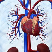 srce, Shutterstock 13643476