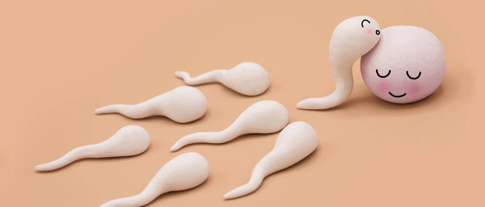 spermiji, Shutterstock 468170399