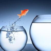 riba, promjena, napredak, Shutterstock 178281617