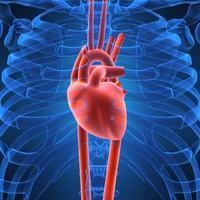 srce-srcani-udar-puls11